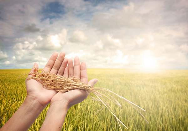 农业大数据展望:六大领域数据亟待推广