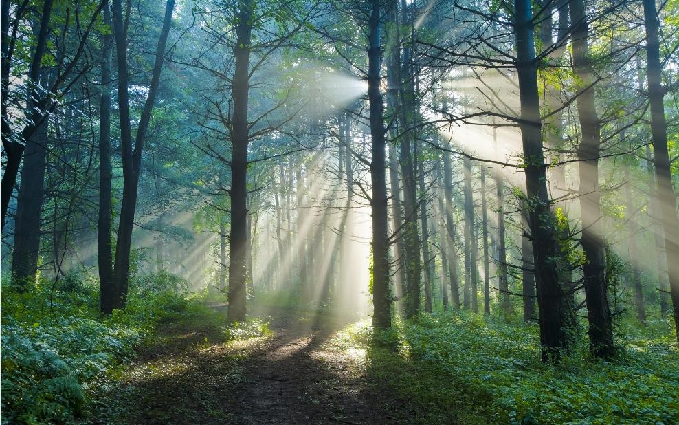天然林保护