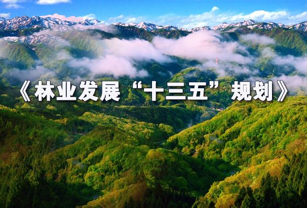 """林业发展""""十三五""""规划"""